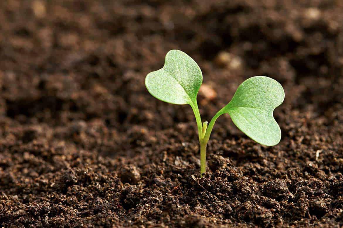 sowing-seed